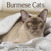Cats - Burmese Wall Calendar 2018 by Avonside
