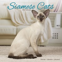 Cats - Siamese Wall Calendar 2018 by Avonside