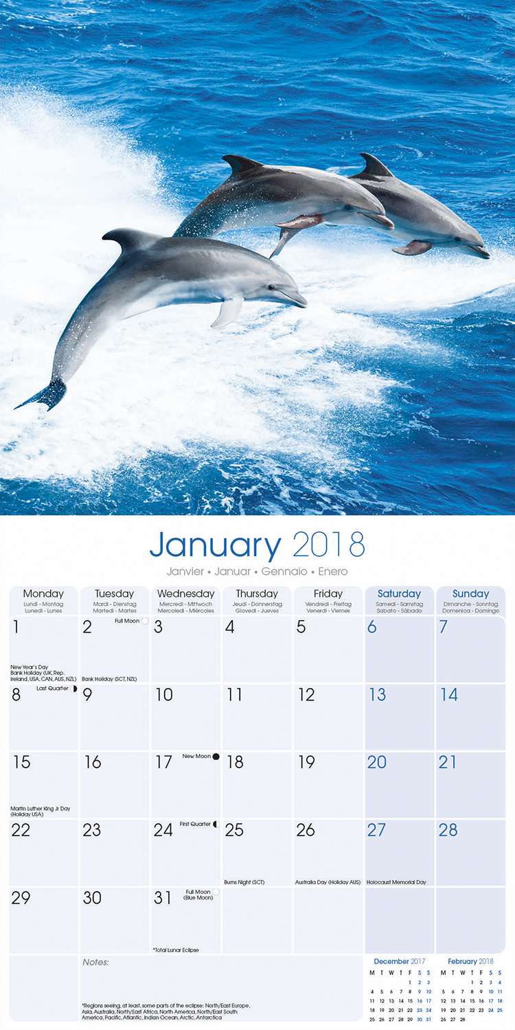 Dolphins – NEW 2018 Premium Square Wall Calendar in 16 Months New Year Xmas Gift
