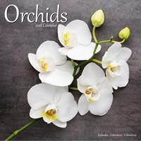 Orchids  Wall Calendar 2018 by Avonside