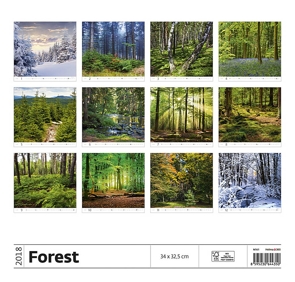 Forest Wall Calendar 2018 by Helma back 8595230644350
