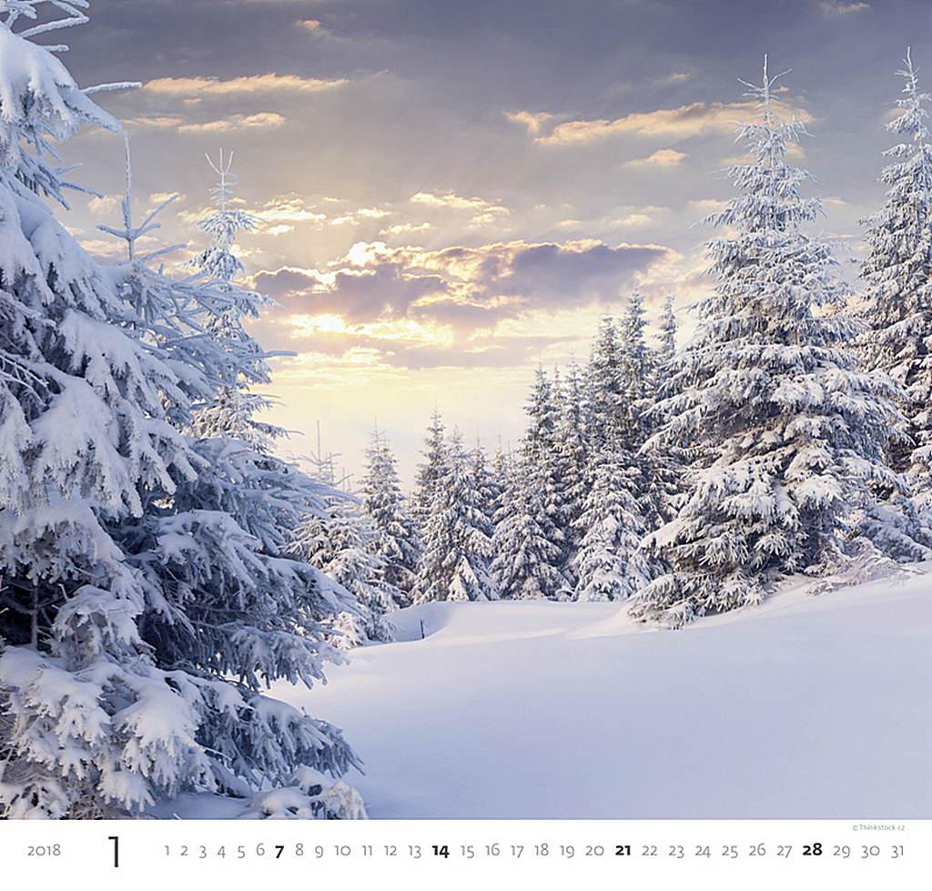 Forest Wall Calendar 2018 by Helma inside 8595230644350