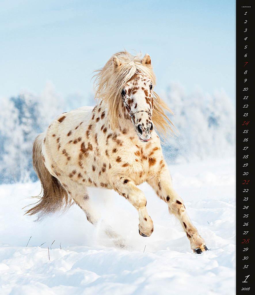 Horses Dreaming Wall Calendar 2018 by Helma inside 8595230645654