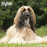 Afghan Wall Calendar - Dog Breed Calendar