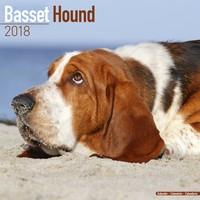 Basset Hound Wall Calendar 2018 by Avonside