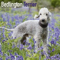 Bedlington Terrier Wall Calendar 2018 by Avonside