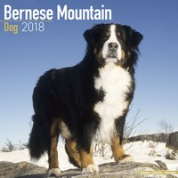 Bernese Mountain Dog Wall Calendar 2018 by Avonside