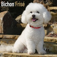 Bichon Frise Wall Calendar 2018 by Avonside