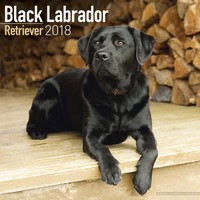 Black Labrador Retriever Wall Calendar 2018 by Avonside