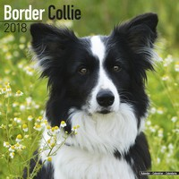 Border Collie Wall Calendar 2018 by Avonside