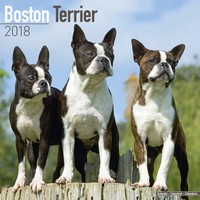 Boston Terrier Wall Calendar 2018 by Avonside