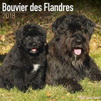 Bouvier Des Flandres (Euro) Wall Calendar 2018 by Avonside