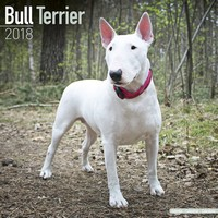 Bull Terrier Wall Calendar 2018 by Avonside