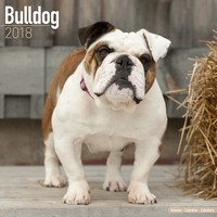 Bulldog Wall Calendar 2018 by Avonside