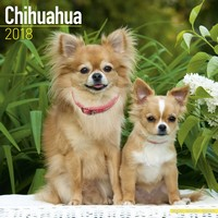 Chihuahua Wall Calendar 2018 by Avonside