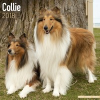 Collie Wall Calendar 2018 by Avonside