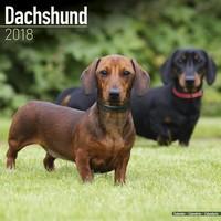 Dachshund Wall Calendar 2018 by Avonside