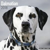 Dalmatian Wall Calendar 2018 by Avonside
