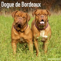 Dogue De Bordeaux Wall Calendar 2018 by Avonside