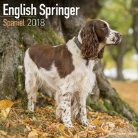 English Springer Spaniel (Euro) Wall Calendar 2018 by Avonside