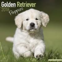 Golden Retriever Puppies Wall Calendar 2018 by Avonside