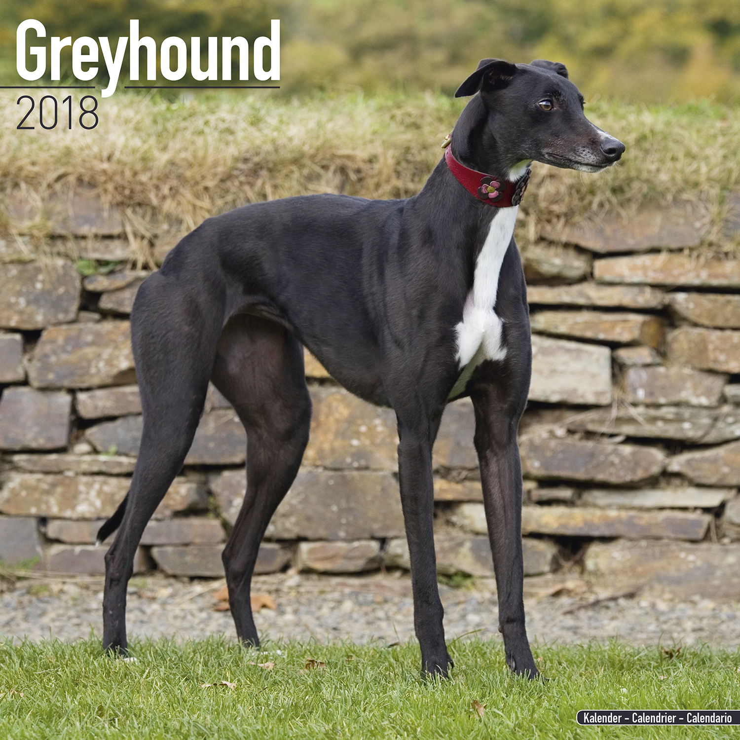 Pictures Of Black Greyhound Dogs