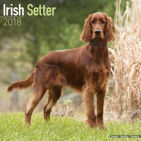 Irish Setter Wall Calendar 2018 by Avonside