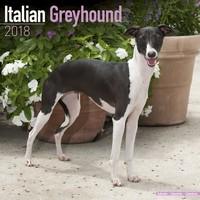 Italian Greyhound Wall Calendar 2018 by Avonside