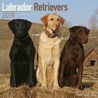Labrador Ret (Mixed) Wall Calendar 2018 by Avonside