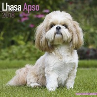 Lhasa Apso Wall Calendar 2018 by Avonside