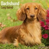 Longhaired Dachshund Wall Calendar 2018 by Avonside