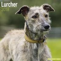 Lurcher  Wall Calendar 2018 by Avonside