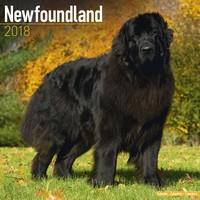 Newfoundland Wall Calendar 2018 by Avonside