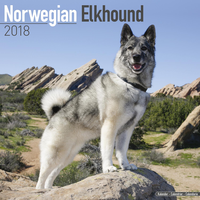 norwegian elkhound calendar 2018 10056 18 dog breeds