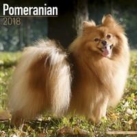 Pomeranian Wall Calendar 2018 by Avonside