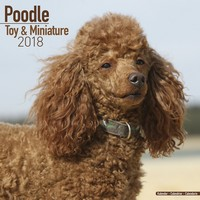 Poodle (Toy & Miniature) Wall Calendar 2018 by Avonside