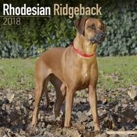 Rhodesian Ridgeback Wall Calendar 2018 by Avonside