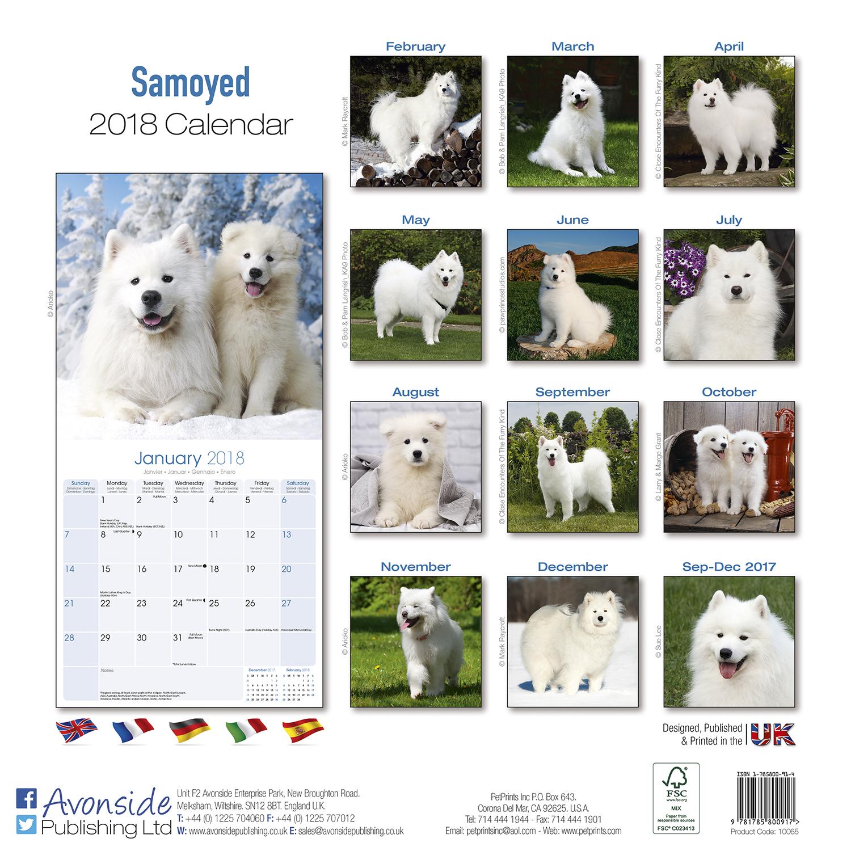 Calendar Dogs : Samoyed calendar pet prints inc