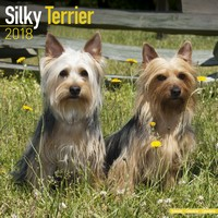Silky Terrier Wall Calendar 2018 by Avonside