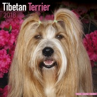Tibetan Terrier Wall Calendar 2018 by Avonside
