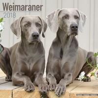 Weimaraner Wall Calendar 2018 by Avonside