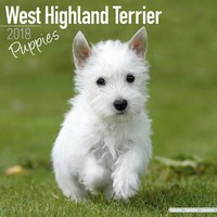 West Highland Terrier Puppies Wall Calendar 2018 by Avonside
