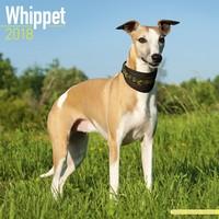 Whippet Wall Calendar 2018 by Avonside