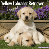 Yellow Labrador Puppies Wall Calendar 2018 by Avonside