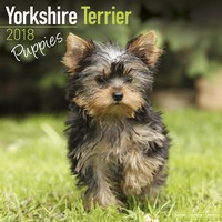 Yorkshire Terrier Puppies Wall Calendar 2018 by Avonside