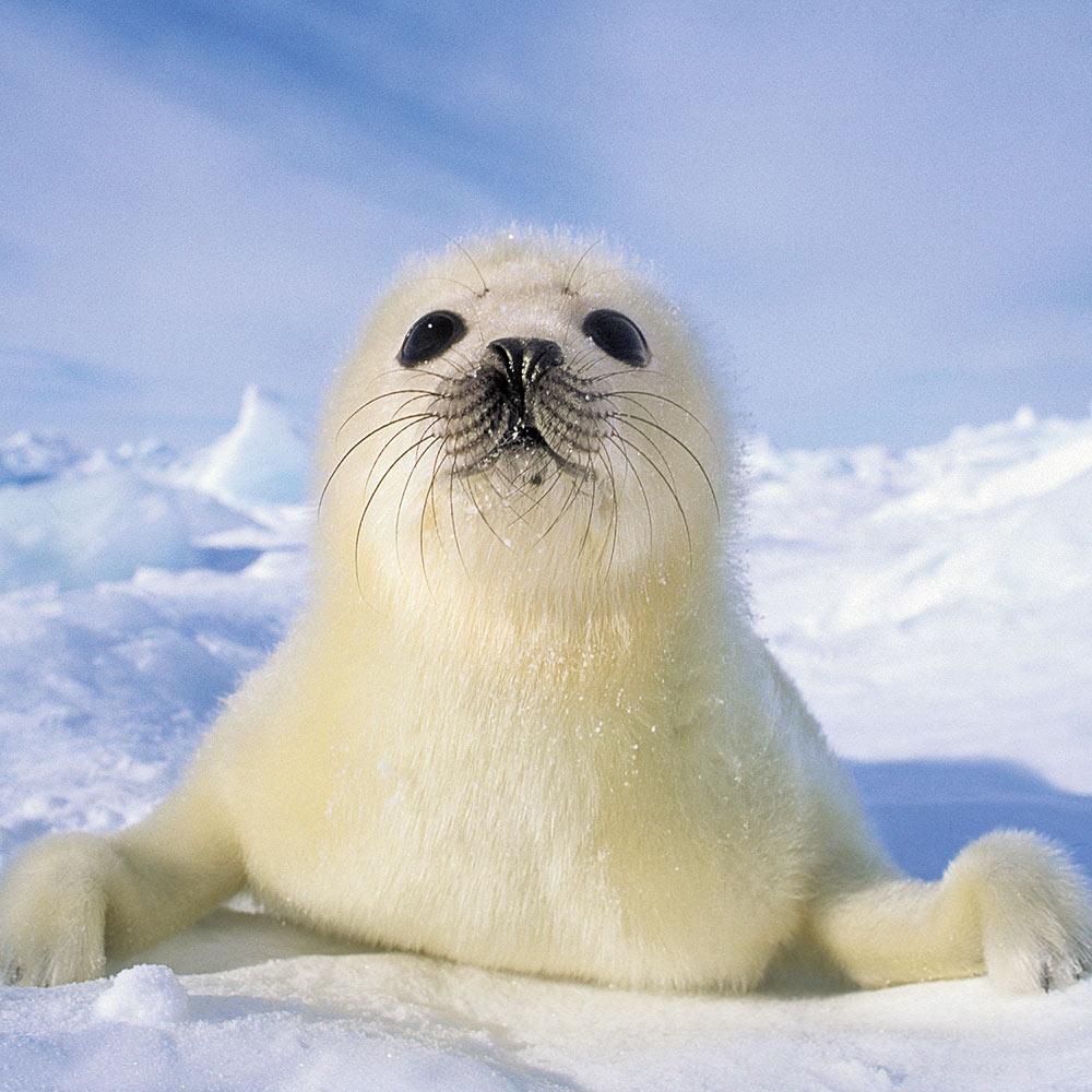Animal Babies Calendar 2018 by Presco Group inside 8595054252502
