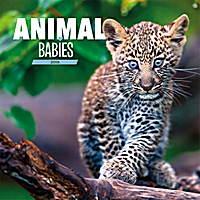 Animal Babies Calendar 2018 by Presco Group 8595054252502