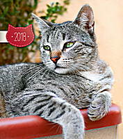 Cats Calendar 2018 by Presco Group 8595054247256