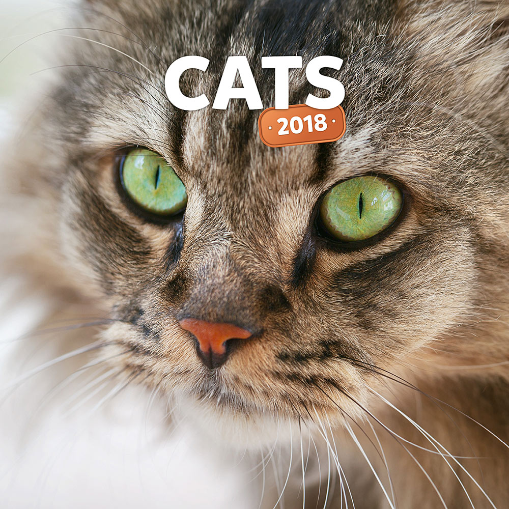 Cats Wall Calendar 2018 by Presco Group 8595054248161