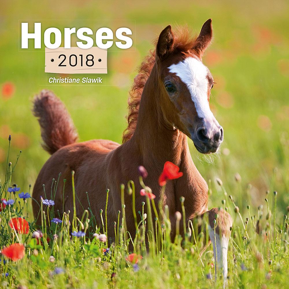 Horses by Christiane Slawik Calendar 2018 by Presco Group 8595054248222